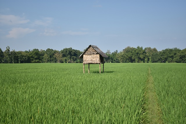 rice-fields-2264679_640